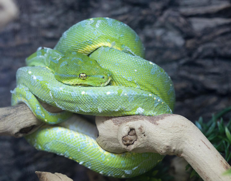 Reptile Room - Hayward
